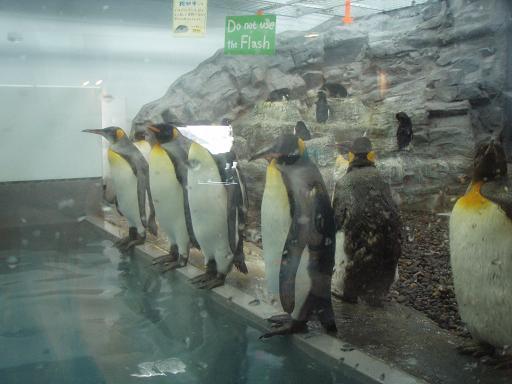 整列ペンギン