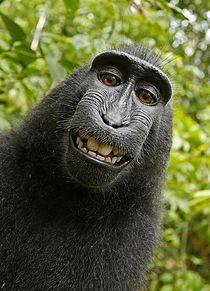 笑ってる猿