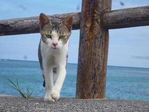 2 一番ナイスショット猫