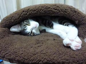 1000円寝袋猫