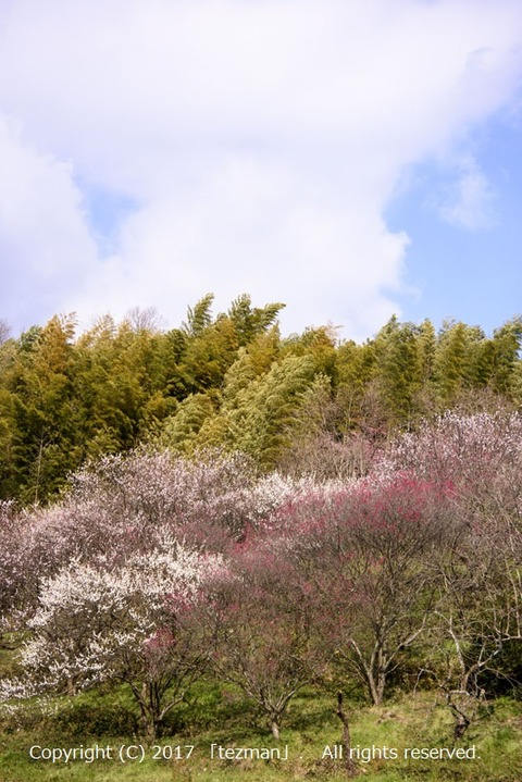 170309井寺3
