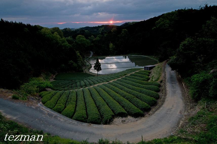 てつまんの写真日記:山添村 茶畑...