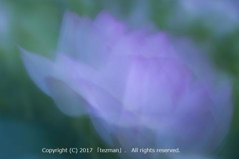 170728蓮夢幻4