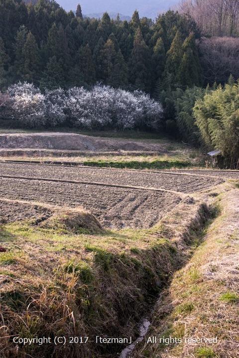 170226桜井1