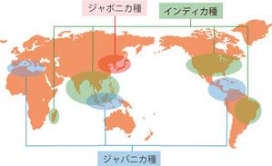 世界の米の種類