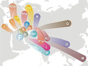haplogroup_f