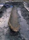 尾上浜遺跡の丸木舟