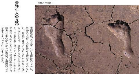 垂柳遺跡の弥生人の足跡