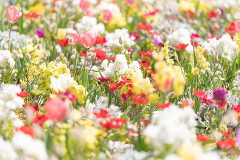 spring201943FTHG7188_TP_V