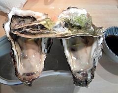 魚苑にんじん 岩牡蠣