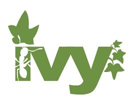 ivy-lierre