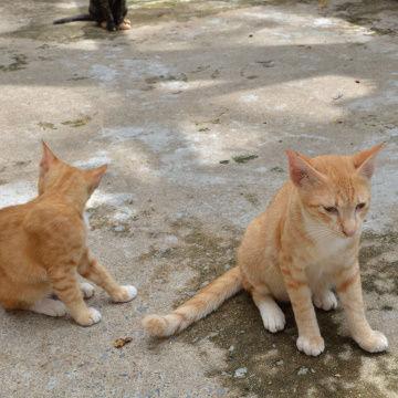 お寺のネコ4