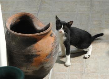 cat_Pot_2