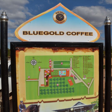 Blue_Gold_Coffee_11