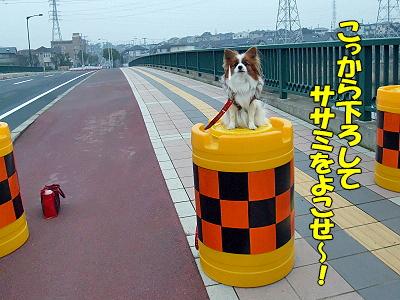 サザビー★関所�