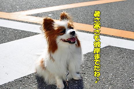 東京インター2009�