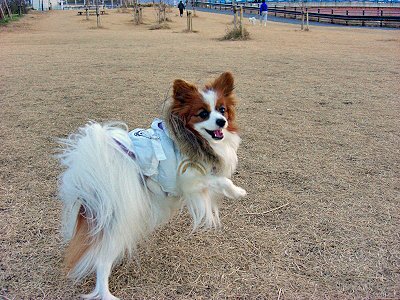 初散歩★�