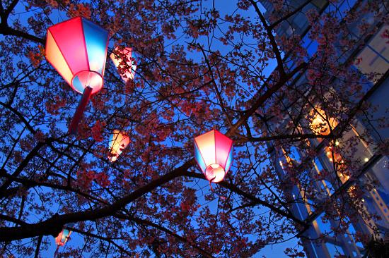 いつかの夜桜 07