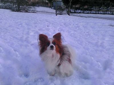 雪の降った日�