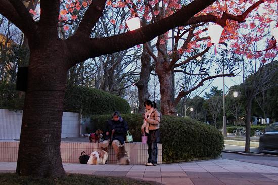 いつかの夜桜 03