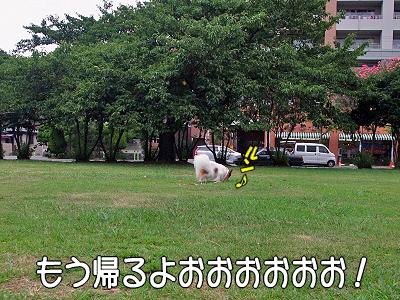 夏休み企画 No12�