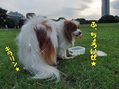 ゴージャス★�