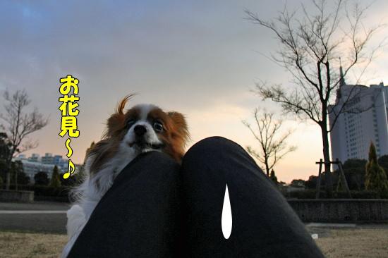 河津桜♪ 03