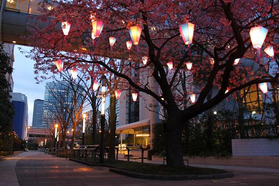 いつかの夜桜 13