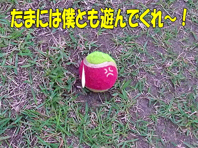ボールの気持ち�