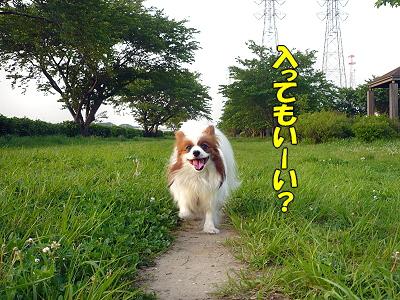 草の中を歩くと・・・�