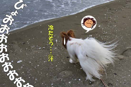 サザビー、砂浜に立つ!! 15