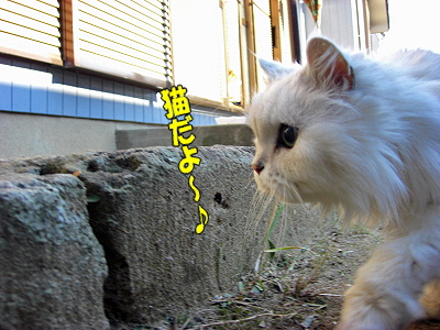 朝だよ〜♪�