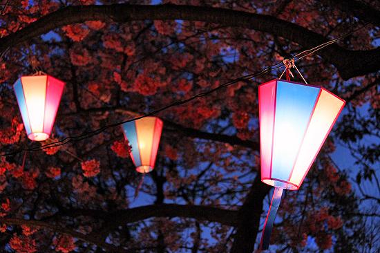 桜を見に行こう♪ 07