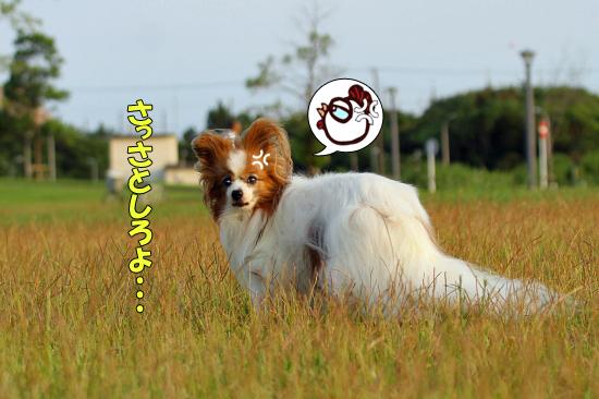 【サザオフ★2016】の詳細♪ 03