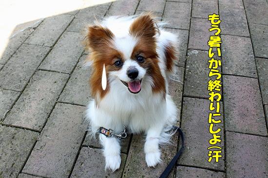 吉田公園♪(後編)�