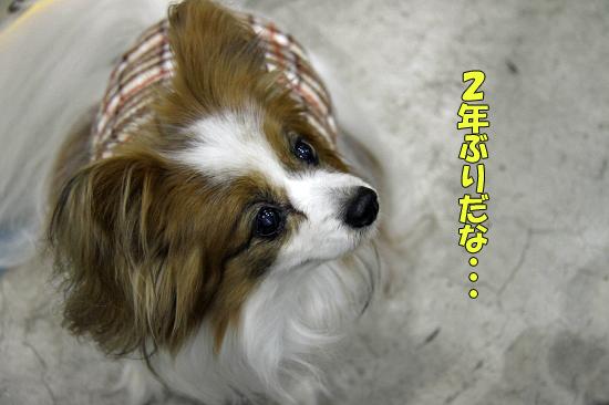 2年ぶりのダックショー(前篇) 02