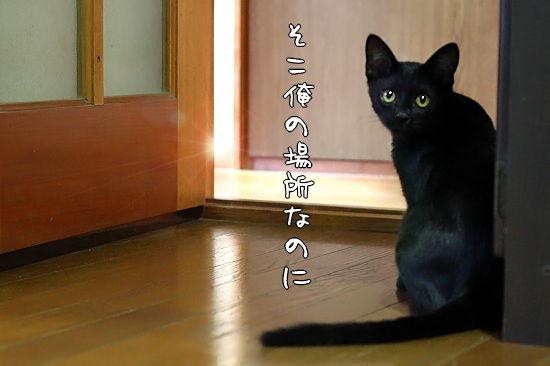 黒いシナンジュ�