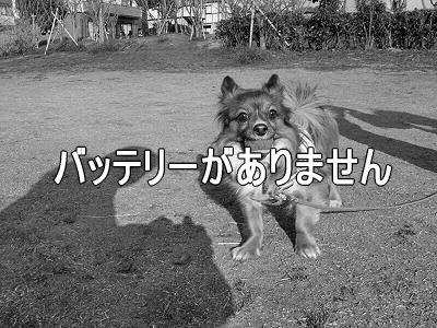 春一番(ハルちゃん圧勝編)�