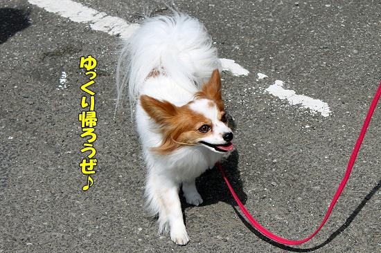 成田行脚の旅�