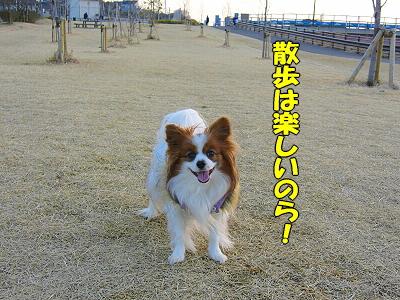 〜のら!�