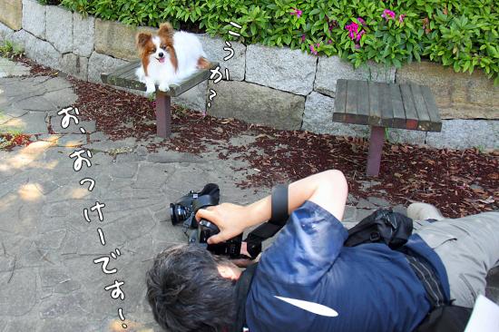 【Wan 2011】(後篇) 12