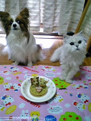 食べてイイの?