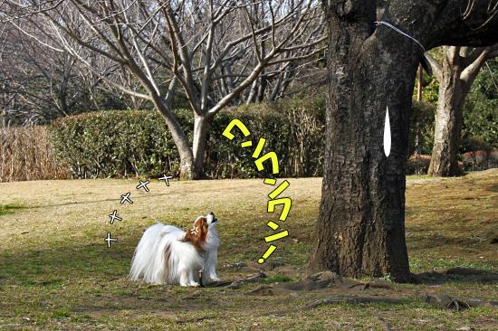 この木なんの木・・・ 03
