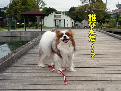 赤舌プレミアムカード★�