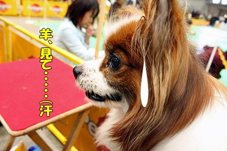 ガンガレ★ヨーキーズ�