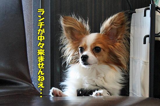 再びMerry Dog�