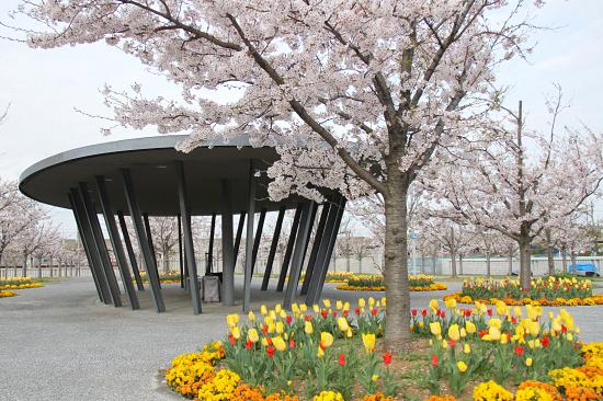 今年の桜は綺麗です★☆★  01