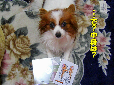 【CDプレゼント・抽選方法】�