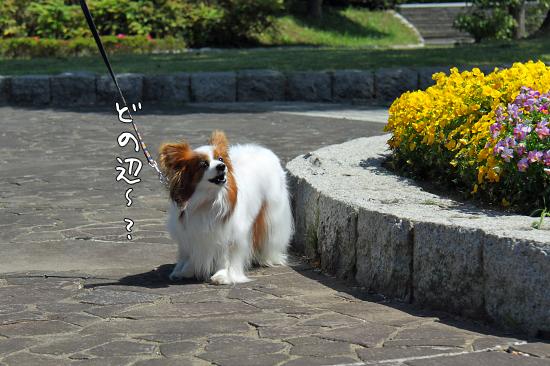 【Wan 2011】(前篇) 15
