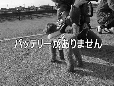 春一番(ハルちゃん圧勝編)21
